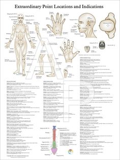 Extraordinary acupuncture points.
