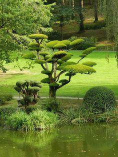 Japonesa Maul�vrier Park (Le Parc Oriental De Maul�vrier). Francia / Arhimir / Arhimir