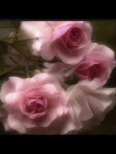 جميل الورد