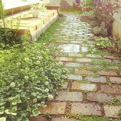 レンガは、経年変化が美しく表れてくる素材。なじんでくる植物との相乗効果で、より雰囲気のあるアプローチへと変化していきます。