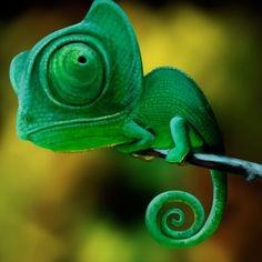 Le plus récent Photos Reptiles desenho Réflexions Nature Animals, Animals And Pets, Baby Animals, Funny Animals, Cute Animals, Les Reptiles, Cute Reptiles, Reptiles And Amphibians, Beautiful Creatures