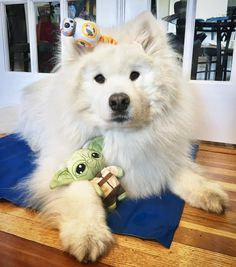 The force is strong with this one! #MayTheFourthBeWithYou  #StarWarsPets