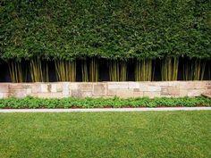 Les 11 meilleures images de Haie bambou | Backyard patio, Winter ...