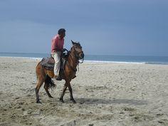 Activities and trips from the Hacienda El Dorado, Ecuador Whale Watching, Horse Riding, Ecuador, Diving, Camel, Surfing, National Parks, Horses, Activities