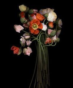Joyce Tenneson, Poppy Bouquet, 2011