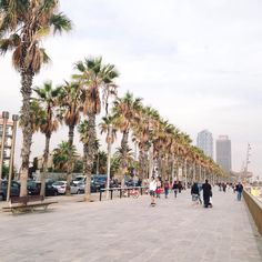 Barcelona @ Platja de la Barceloneta