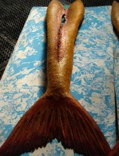 A mermaid tail from h2O just add water