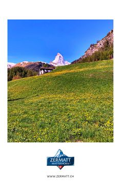 in Zermatt - Matterhorn: Hiking Unlimited: Enjoy the stay of your dreams in Zermatt with pure hiking delight along 400 km of hiking trails around the Matterhorn. Zermatt, Hiking Routes, Hiking Trails, Half Board, Holiday Apartments, Hotel Reservations, Swiss Alps, Delphinium, Free Travel