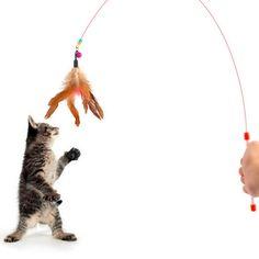 Kat speelgoed Leuke Ontwerp Staaldraad Plaagveer Wand Plastic Speelgoed voor katten Kleur Multi Producten Voor pet Nieuwe collectie