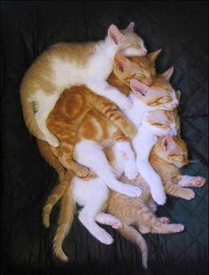 Kitty nesting dolls