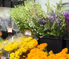 We proudly provide our customers with a huge variety of flowers and floral products. From dozens of delicate rose varieties, to exotic orchids, to natural succulents, fresh greens, and even luscious ranunculus and peonies, we carry it all! We invite you to hand pick the exact bunches you want, just as you would if you were strolling through the flower shops in Seattle's Pike Place Market or the Flower Mall in Los Angeles.