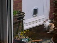 Read this-(Pet House Rabbit using the Kitty Cat Flap in Door-YouTube) but look at this link This is a cute compilation of bunnies and doors from FB- https://www.facebook.com/video.php?v=1013166655376028&fref=nf (couldn't find it anywhere other than FB to post)