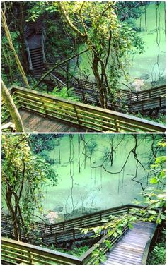 This Boardwalk In Florida Leads To A Hidden Miniature Rain Forest Hiking In Florida, Places In Florida, Florida Beaches, Florida Vacation, Florida Travel, Vacation Places, Dream Vacations, Vacation Spots, Travel Usa