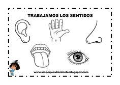 Fichas de los sentidos