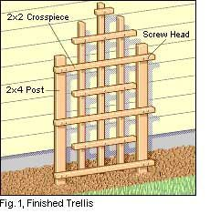 Home Tips : DIY How to Build a Garden Trellis