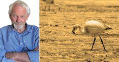 Från Chiles gruvdistrikt hämtas litium som behövs till elbilarna som rullar på våra gator. Men arbetarna där har inte råd med några elbilar. I stället torkar deras sjöar och den rosa flamingon dör. Men kanske är en ändring på gång, skriver Lars Palmgren från Chile. Chile, Santiago, Chili