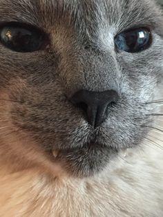 #Cats  #Cat  #Kittens  #Kitten  #Kitty  #Pets  #Pet  #Meow  #Moe  #CuteCats  #CuteCat #CuteKittens #CuteKitten #MeowMoe      Lookatdemteefies   https://www.meowmoe.com/135634/