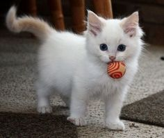 Do You Like My Ball? - Click to see loads of great pictures of cats and kittens to brighten your day.