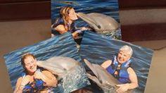Dolfijnen zwemmen in Mexico