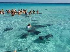 swimming with stingrays!! Grand Cayman Islands