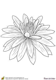Dessin de fleur de lys - Dessin de fleur facile ...
