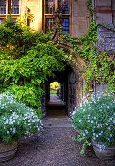 Oxford, what kind of greenery is on left ,really pretty (for 2015 )