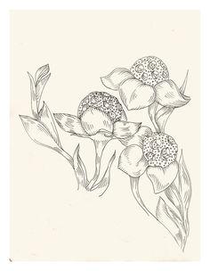 Apuntes para estampado floral