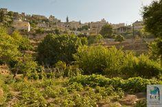 #Battir_Village_5