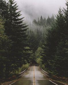 samelkinsphoto: evergreens