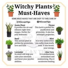 Wicca Do you grow plants at your home? I'd love to have a big garden one day but for the moment I ju Plantas Indoor, Witchy Garden, Garden Spells, Witch Herbs, Herbal Witch, Witchcraft For Beginners, Wicca For Beginners, Green Witchcraft, Witchcraft Herbs
