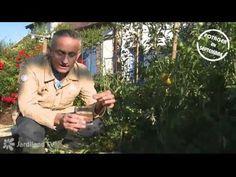 Récolte du potager - Jardiland TV