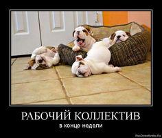 РУБРИКА: #бухгалтерский_юмор  #Просто_так #Прикол #Смешно #Конец_рабочей_недели #Главбух #яглавбух