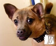 Dewey is one of the pets waiting for a new home at the York County SPCA. See more of them in the Take Me Home video: http://www.yorkdispatch.com/videos