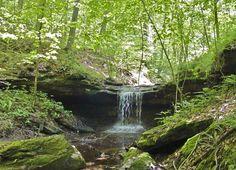 tranquil stream a good picnic site