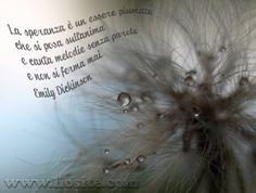 La speranza è .... Dolce Emily Dickinson... forse si deve essere come lei per credere nella speranza.  #EmilyDickinson, #poesia, #speranza, #anima, #liosite, #citazioniItaliane, #frasibelle, #ItalianQuotes, #Sensodellavita, #perledisaggezza, #perledacondividere,  #GraphTag, #ImmaginiParlanti, #citazionifotografiche,