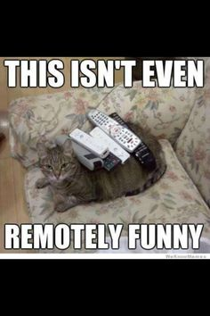Cat people are more likely to enjoy puns. This isn't funny, it's hilarious! Funny Animal Pictures, Funny Animals, Cute Animals, Animal Funnies, Animal Memes, Animal Captions, Funny Photos, Animal Logic, Odd Animals