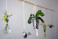 diy green wall, hanging plants