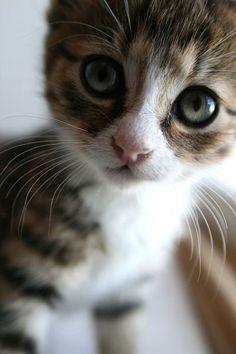 that's a cute cat