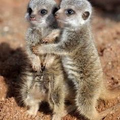 40 Pictures Of Cute Animals To Help You Concentrate – Animal Planet Cute Creatures, Beautiful Creatures, Animals Beautiful, Majestic Animals, Cute Funny Animals, Cute Baby Animals, Animals And Pets, Animals Photos, Cutest Animals