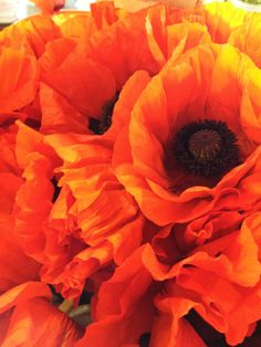 pikes poppies…