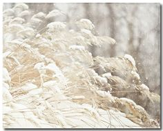 """Beige Nature Photography, Snow Grasses Picture, Grey Tan Ivory Cream. Unframed horizontal snowy grass photograph. • Borderless fine art photograph with a soft luster finish. • Available in sizes 8x10 through 30x40 (Click """"Select Options"""" menu to choose). • Watermark does not appear on final photograph."""