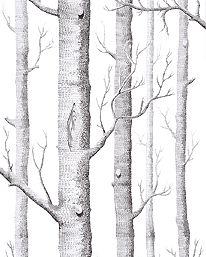 Woods White / Black från Cole & Son.  En klassiker. Jag gillar den men kanske lite sönderbloggad.