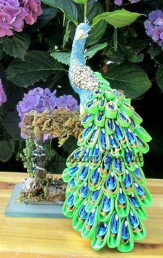 peacock 20