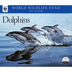 Dolphins WWF Wall Calendar: Dolphins are highly social animals that live in pods, some of which can number a thousand individuals, all clicking, whistling, and otherwise communicating with one another.  $13.99  http://calendars.com/Sea-Life/Dolphins-WWF-2013-Deluxe-Wall-Calendar/prod201300002793/?categoryId=cat00345=cat00345#