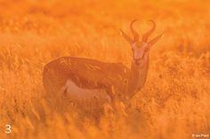 """Lighting Wildlife"" by Ian Plant."