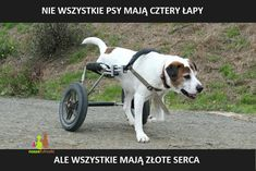 Dog Quotes, Life Quotes, Dog Wheelchair, True Stories, Animals And Pets, Pet Adoption, Sad, Puppies, Lettering