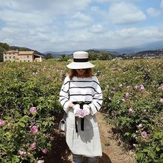 Chanel rose fields in Grasse, France