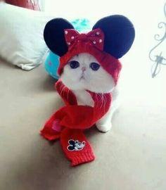 Minnie Mouse Kittie