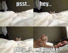 Psst...hey...hey?...you awake? #Caturday