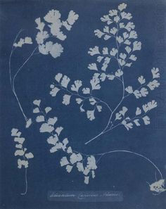 Female Artists of Art History Atkins, Sun Prints, Indigo Prints, Anna, Experimental Photography, Animation Reference, Cyanotype, Illustrations, Blue Aesthetic